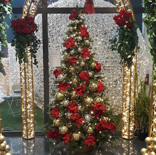 Mit Plantas Weihnachtsbäumen gehen Sie auf Nummer sicher