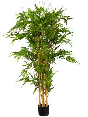 Bambus 150 UV