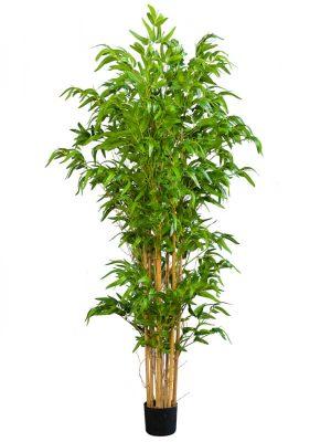 Bambus 180 UV