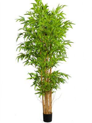 Bambus 210 UV
