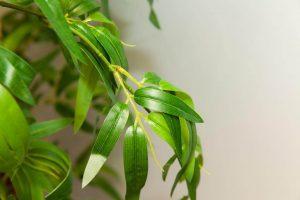 Bambusblatt