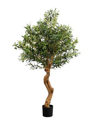 "Olivenbaum ""Twisted"" 160"