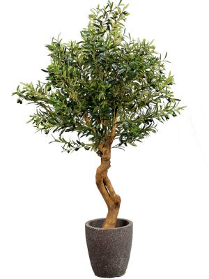 Olivenbaum Twisted 160