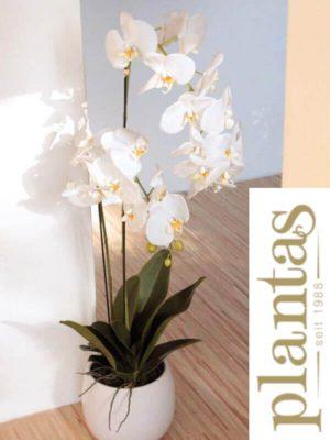 Orchideen in Keramiktopf, Creme/Weiß, 100