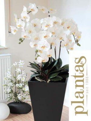 Orchideen in Vase, Creme/Weiß, 155