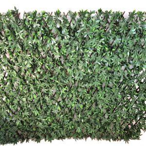 Ahornhecke am Weidenspalier UV