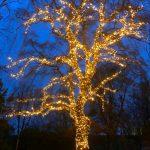 Baumbeleuchtung Laubbaum