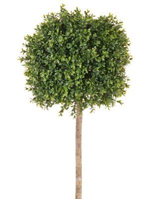 Buchskugelbaum 105
