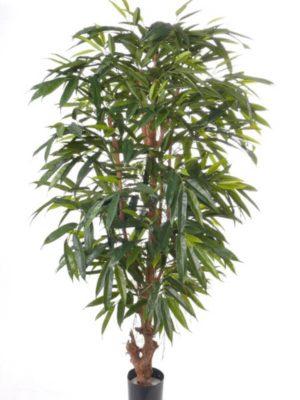 """Ficus Longifolia """"deluxe"""" 180"""