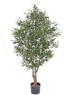 Olivenbaum mit Früchten 150