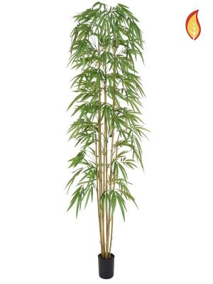 Bambus 240 FR